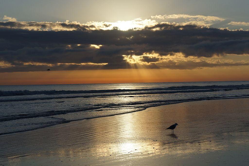 New Smyrna Beach shoreline